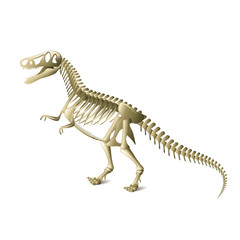 Dinosaur skeleton isolated on white vector