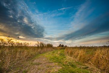 Path through Wild Countryside