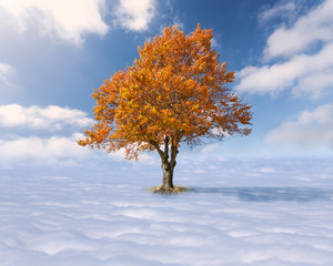 Single tree with red leaves above the clouds