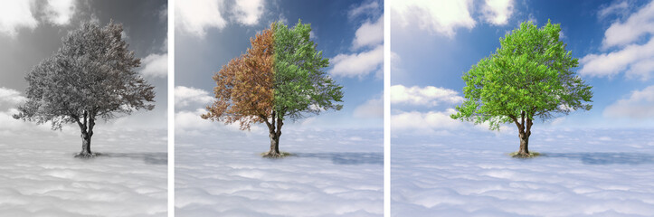 Collage - Lone tree above the clouds
