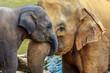 Leinwandbild Motiv elephant and baby elephant