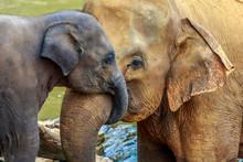 """Постер, картина, фотообои """"elephant and baby elephant"""""""