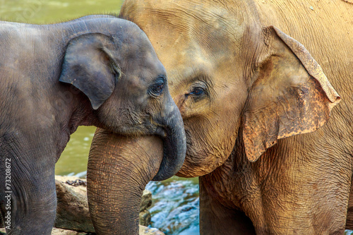 Plexiglas Olifant elephant and baby elephant