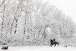 Cantering horseback on a snowy field