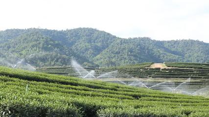 Irrigation Sprinklers at tea field