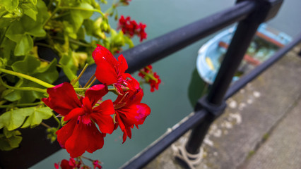 Flowers and boat at Dartmouth 1