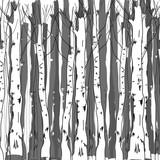 Fototapeta Background of birch trunks