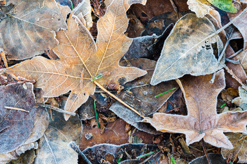Fallen autumn leaves for background
