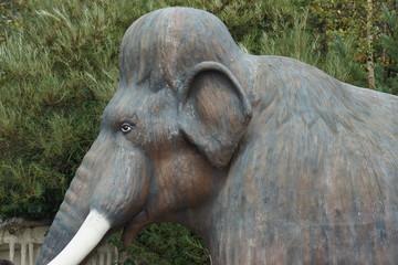 Woolly Mammoth - Mammuthus primigenius