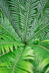 Center of fern leaf