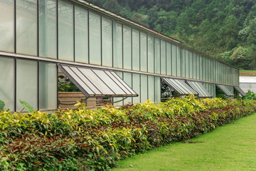 Greenhouse hillside in Chiangmai