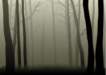 Vector illustration of misty woods