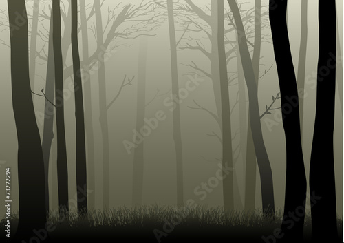 Vector illustration of misty woods © rudall30