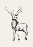 Sketch illustration of a reindeer