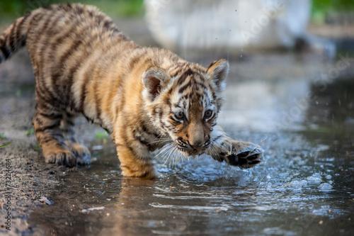 Papiers peints Tigre tiger