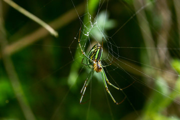 Green spider and spider web