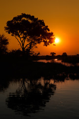 Tree reflected in water at sunset, Kwando river