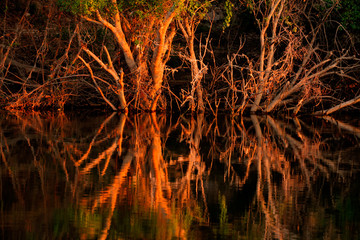 Trees and reflection in water, Zambezi river
