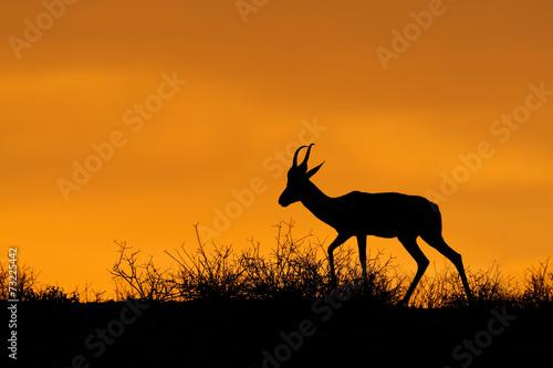 Fotobehang Antilope Springbok silhouette, Kalahari desert