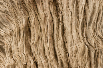 detail of gnarled tree trunk