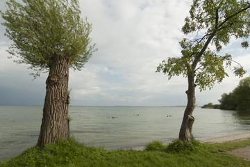 Bäume an der Mürritz