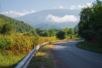 Beautiful countryside road in green - yellow field