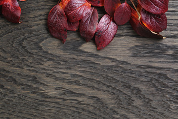 autumn background with bush leaves on stained oak table