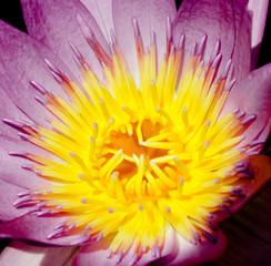 Calm Meditation Heavenly Lily