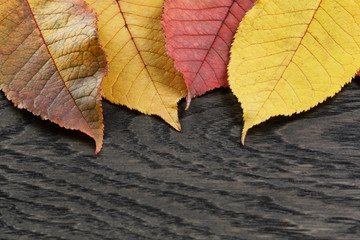 autumn cherry leaves on old oak table