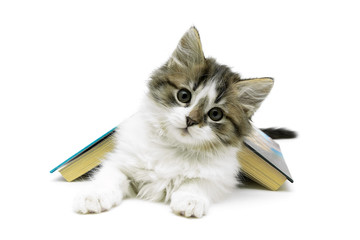 fluffy kitten and open book isolated on white background
