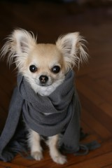 Protect your dog from cold in winter