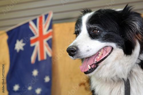 Poster Oceanië Border Collie Sheep Dog