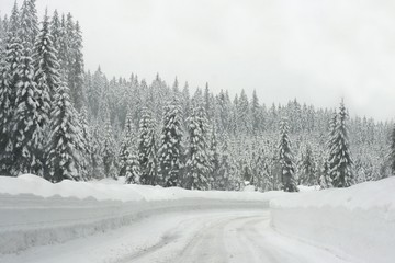 High mountain road through spruce forrest