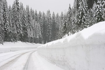 High mountain road through spruce forrest during a snowstorm