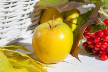 Apples and red viburnum