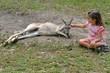 Eastern grey kangaroo female