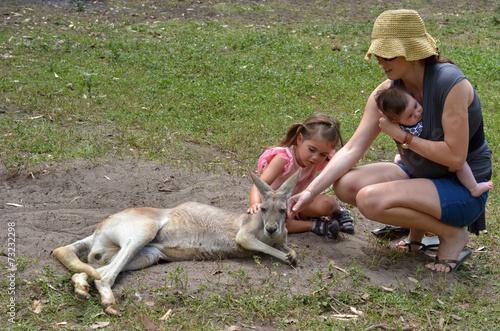 Poster Kangoeroe Eastern grey kangaroo female