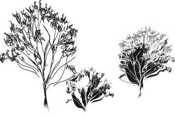 Sketch of three trees