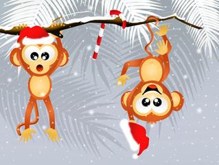 monkeys at Christmas