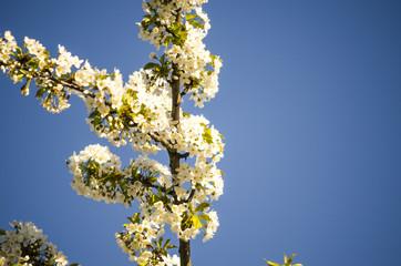 flower blossomed