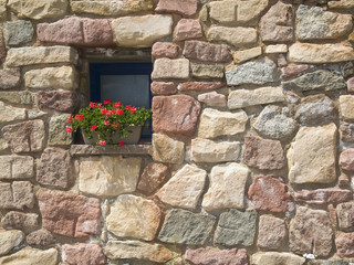 flower pot in a window