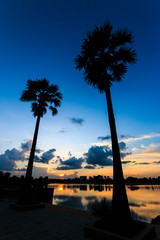 Sugar palm trees on sunset sky in the park