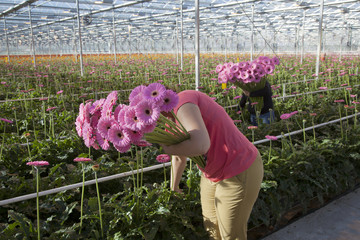 women pick flowers in greenhouse