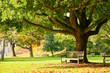 Kew Gardens park - 73236285