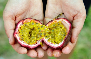 Hands holding Passionfruit