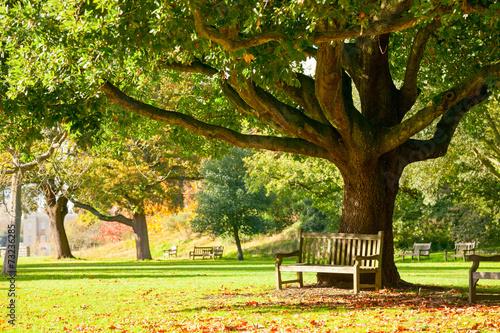 Papiers peints Jardin Kew Gardens park