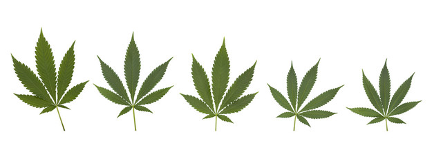 Set of cannabis leaves set
