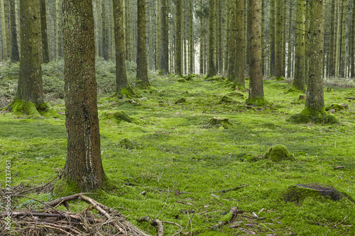 canvas print picture Wald mit Moos