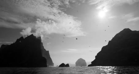 Northern gannets seen on the steep cliffs of St Kilda, UK