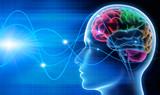 Gehirn - Schwingungen 1 - 73243812